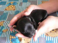Adélka - černá, bílé pacinky a bradička
